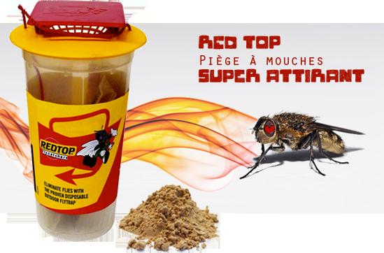 piège naturel qui attire les mouches
